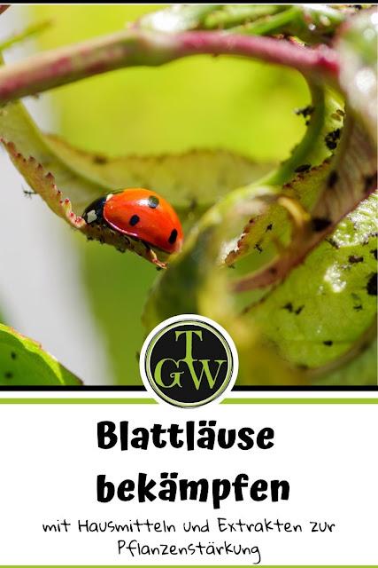 Blattläuse im Garten auf Pflanzen natürlich, ohne Gift bekämpfen mit Pflanzenstärkungsmitteln und Nützlingen. #blattläuse #läuse #schädlinge #topfgartenwelt