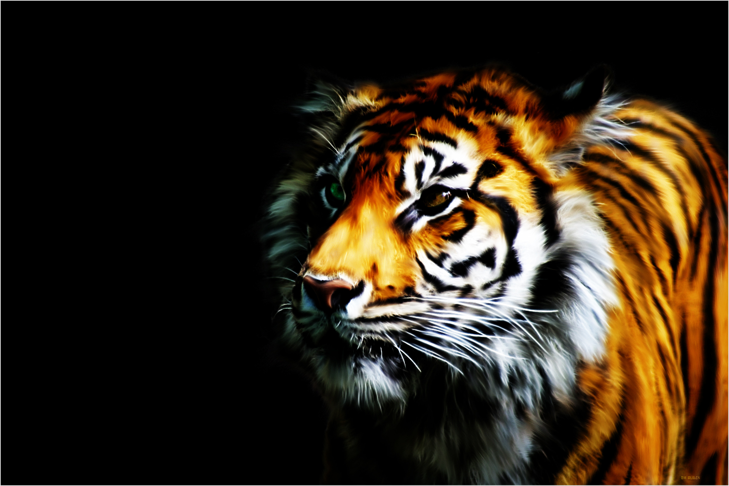 real tigers wallpaper 3d full hd 4k free | top model hairstyle