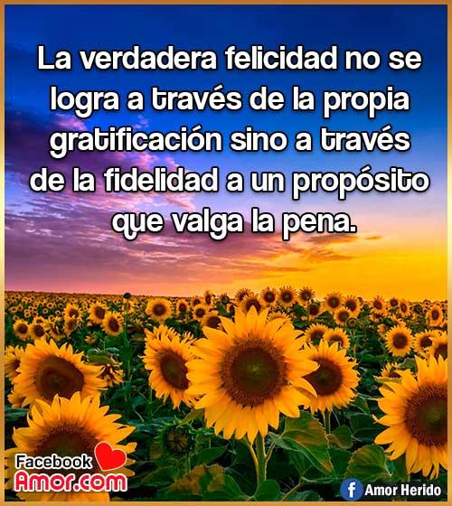 imágenes de flores girasol con frase de felicidad