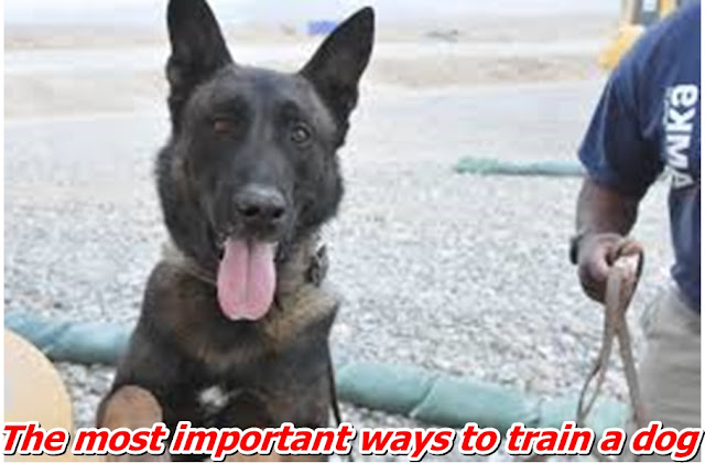 The most important ways to train a dog