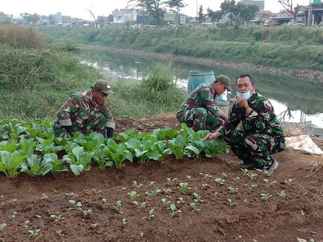 Menunjang Ketahanan Pangan,  Satgas Citarum Sektor 7 Serentak Bangun Demplot Pertanian Di 14 Desa