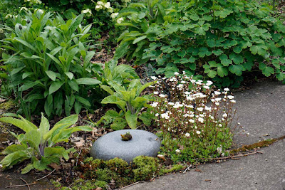 mossy saxifrage next to curling stone