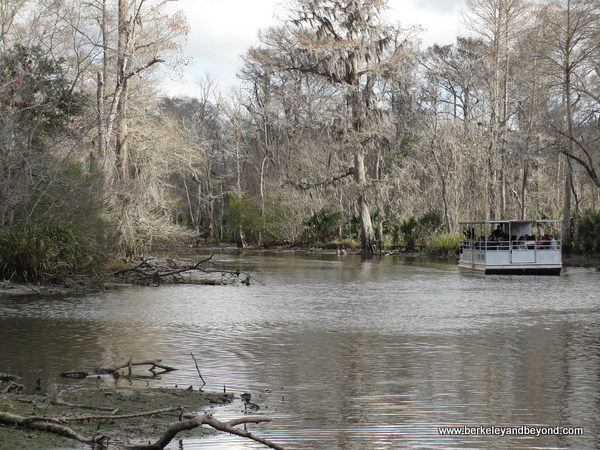 Cajun Pride Swamp Tour in LaPlace, Louisiana