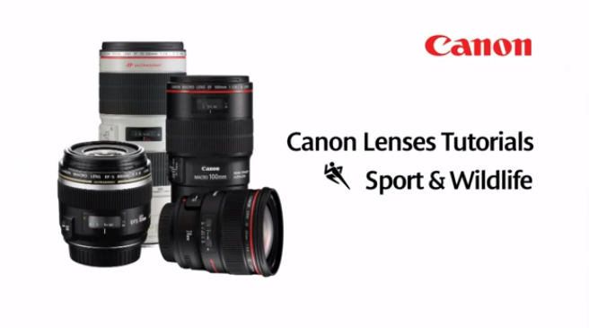 Canon EF Lenses: Sports and Wildlife Lenses - Lens Tutorial 3/5
