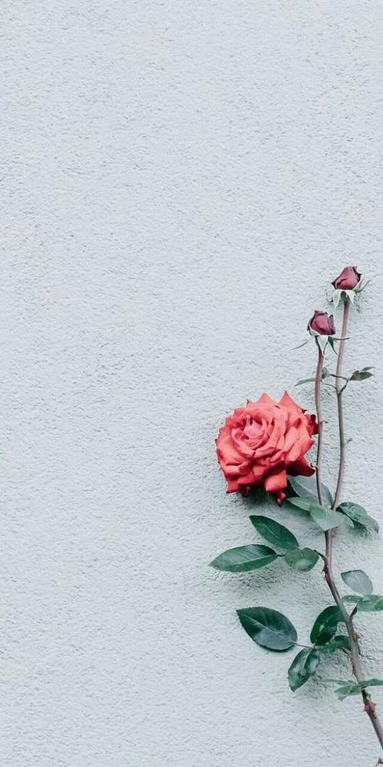 wallpaper bunga aesthetic