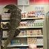 VIDEO. Un varan s'introduit dans un magasin et effraie les clients en Thaïlande