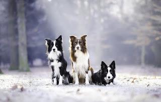 Köpek Resimleri En Güzel Resimler Fotoğraflar Resimleri Köpek Yavrusu Fotoğraflar Resimler Ve Görseller En Sevimli Köpek Fotoğrafı Çok Tatlı Köpek Resimleri Yavru Köpek Resimleri Sadece En Tatlı Köpekler Tatlı Komik Yavru Güzel Köpek Resimleri Köpek Resmi Haberleri Son Dakika Güncel Köpek Resmi Köpek Resimleri Stok Fotoğraflar Görseller ve Fotoğraflar Profesyonel Çekilen Köpek Resimleri Çok Tatlı Yavru Köpek Resimleri