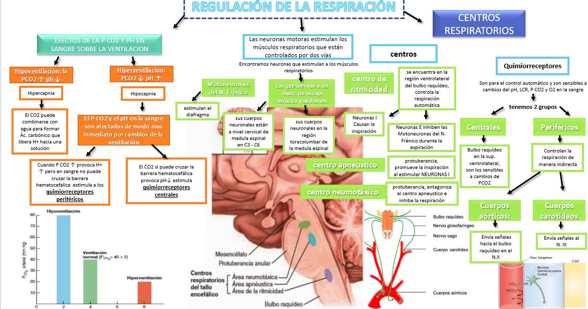 YetzaliZavalaBlogDeFisiologia2016Gpo7: REGULACIÓN DE LA..