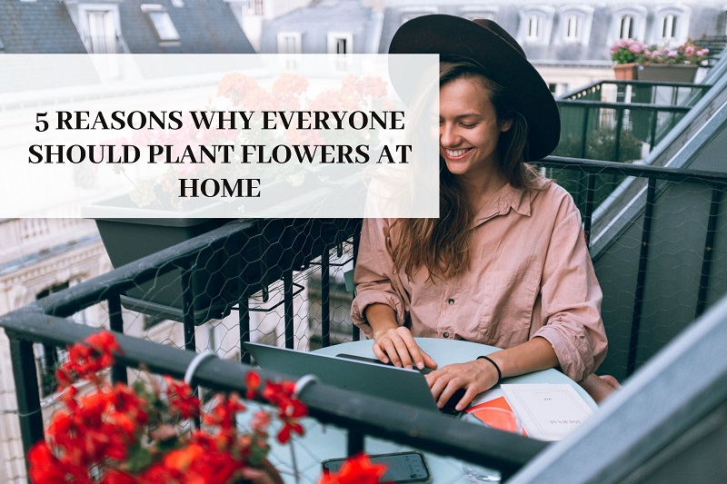 5 Reasons Why Everyone Should Plant Flowers At Home