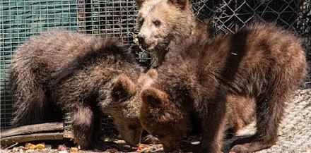 Ο ΑΡΚΤΟΥΡΟΣ δίνει μία δεύτερη ευκαιρία στη φύση σε έξι ορφανά άγρια ζώα