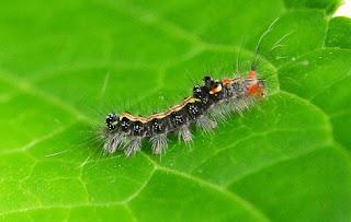 gambar Cara membuat insektisida sendiri dengan bahan yang cukup sederhana