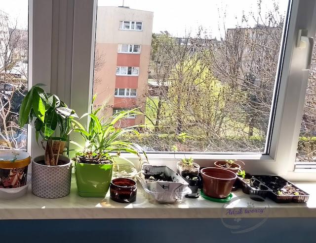 Adzik tworzy - diy ogródek z ziołami i warzywami w domu