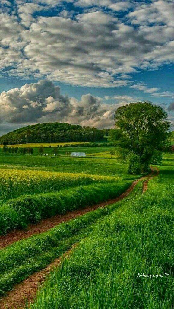 Gambar Pemandangan Alam Pedesaan Sawah