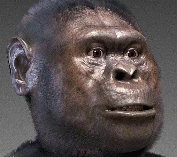 Australopithicus africanus