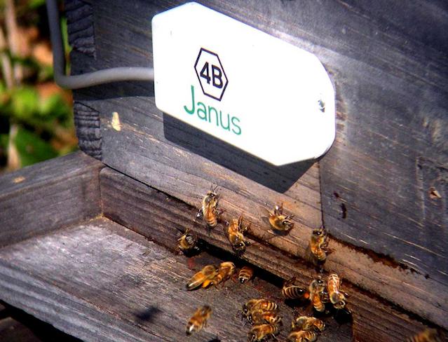 تكنولوجيا الرادار الكهروإجهادية تتعقب عقل خلية النحل