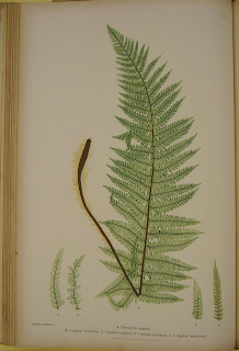 An image of a green fern.