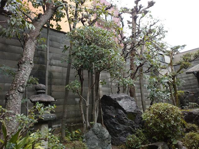 京都市上京区個人邸中庭剪定