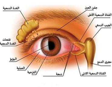 ما هي أعراض جفاف العين جفاف العين : الأسباب - الأعراض - العلاج