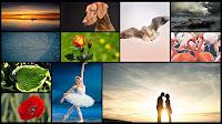 Deniz, kuş, köpek, çiçek, iki sevgili ve balerin fotoğraflarından oluşan kolaj