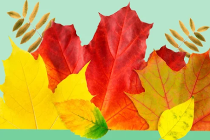 Landscaping Maintenance Tips: Smart Fall Landscape Ideas All Season