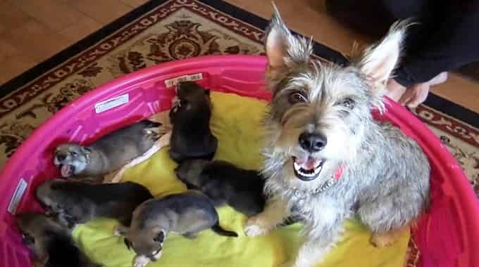 Homeless Pet Dog Gives Birth In Bushes, Cries Thinking Her Babies Will Be Dead Soon