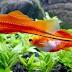 Catatan Bagi Penggemar Ikan Hias, Inilah Tutorial Kerja Pompa Aquarium
