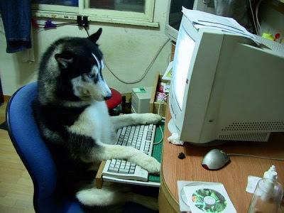 Anjing Yang Menggunakan PC Lag