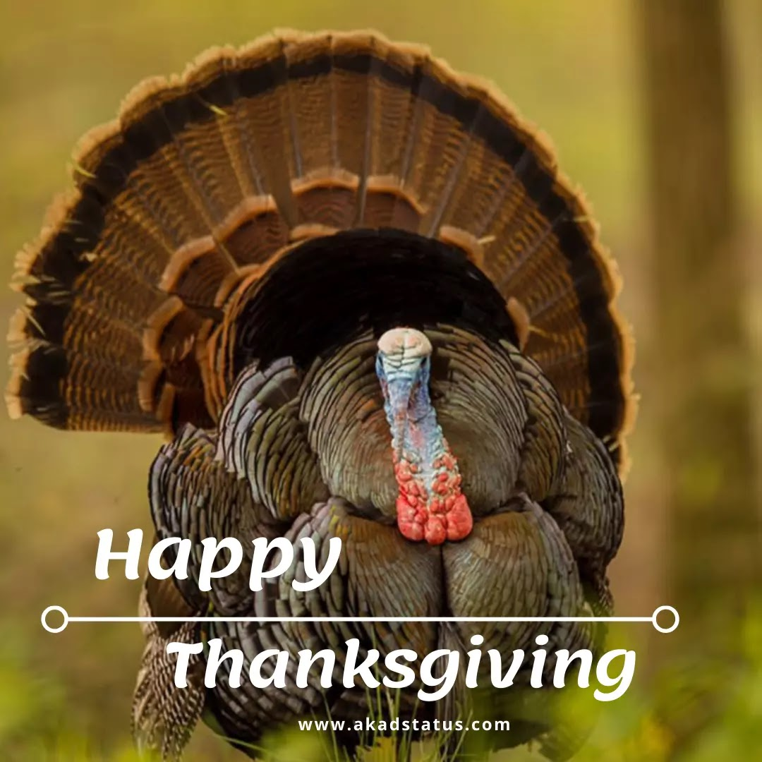 Thanksgiving Images, happy Thanksgiving wishes Images, Thanksgiving quotes Images, happy Thanksgiving pic