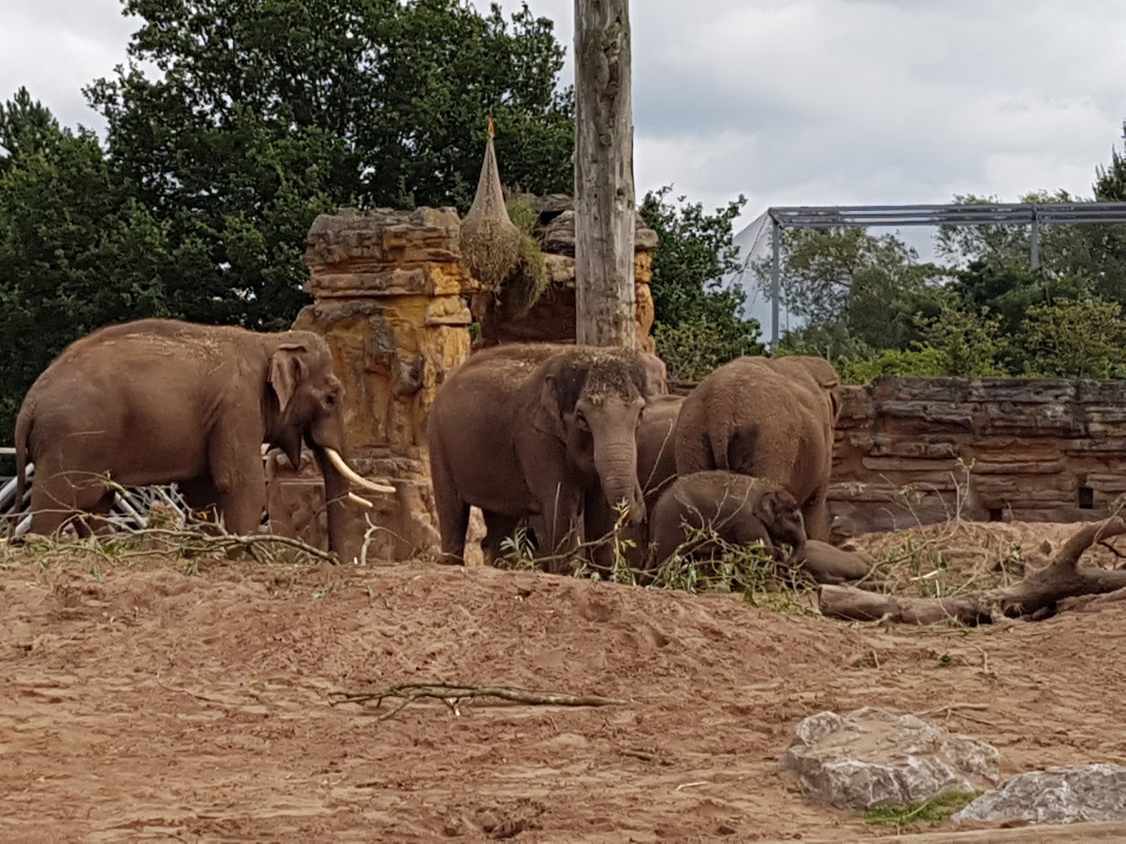 A group of elephants including a baby elephant all standing close together.