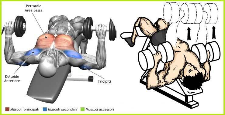 Exercise The Right Way - The Decline Dumbbell Bench Press - all ...