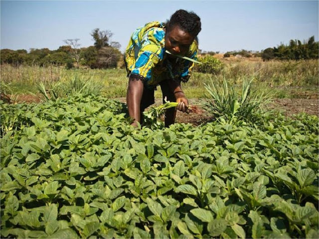 Harnessing local agriculture production to create healthy diets