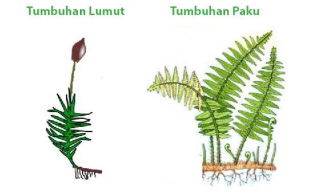 Metagenesis pada Paku dan Lumut