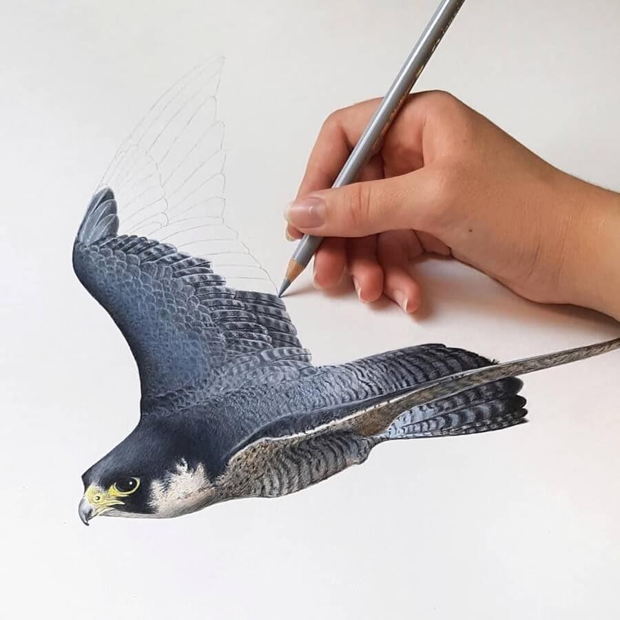 09-Falcon-Paula-www-designstack-co