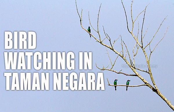 Taman Negara Birding
