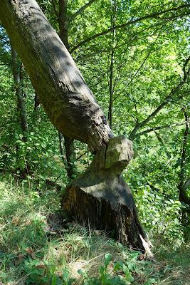 """Ciekawa leśna """"rzeźba"""""""