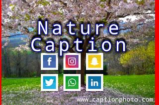 nature caption