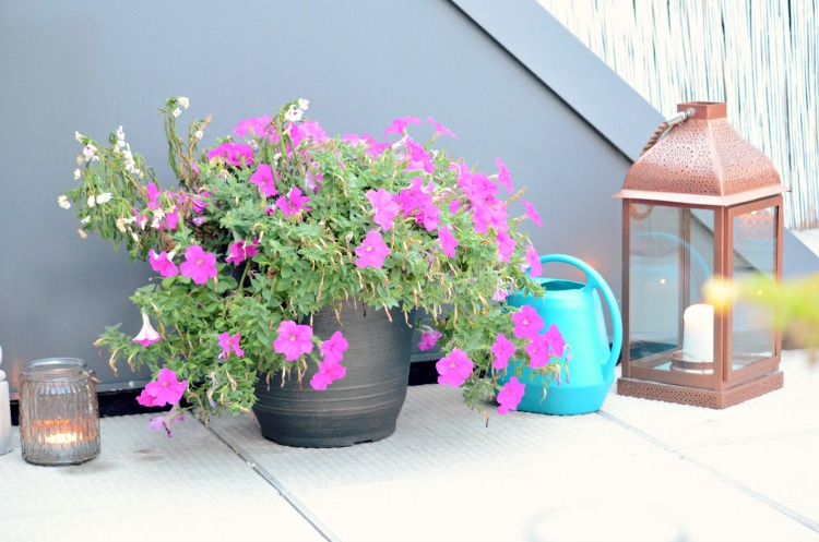 Penthouse Terrace Oasis Watering Can + 10 Best Container Plants For Rooftop Gardening