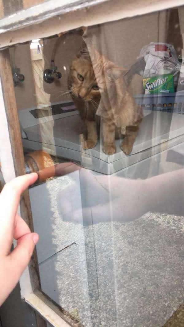 Mamá del gato le señala la manija de la puerta