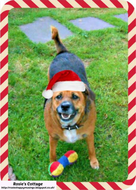 Happy Holidays from our sweet furbaby Jade x