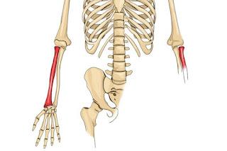 Tulang radius