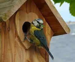 mon arbre le de vivre le douaire pourquoi mettre un nichoir pour oiseaux entretien d 39 un. Black Bedroom Furniture Sets. Home Design Ideas