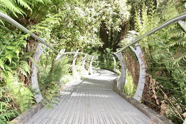 raised boardwalk in rainforest