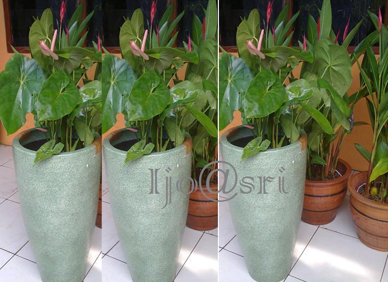 tanaman hias dalam ruangan dan berbunga