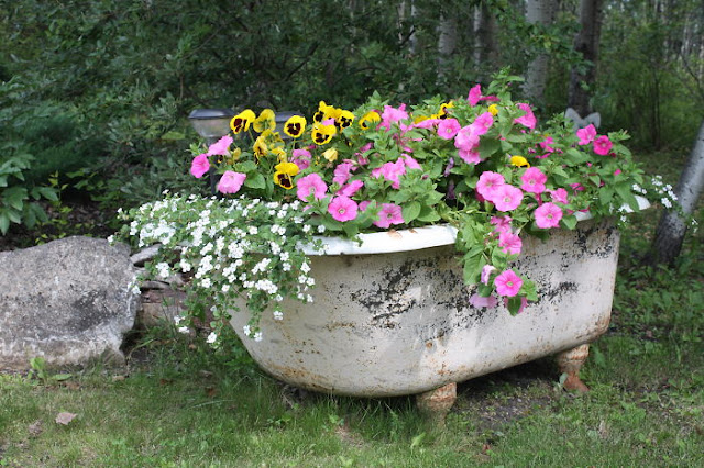 Creative Recycling idea to utilized old Bath Tub to grow Flowers plants