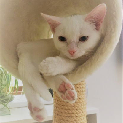 white kitten sitting in cat climbing tower