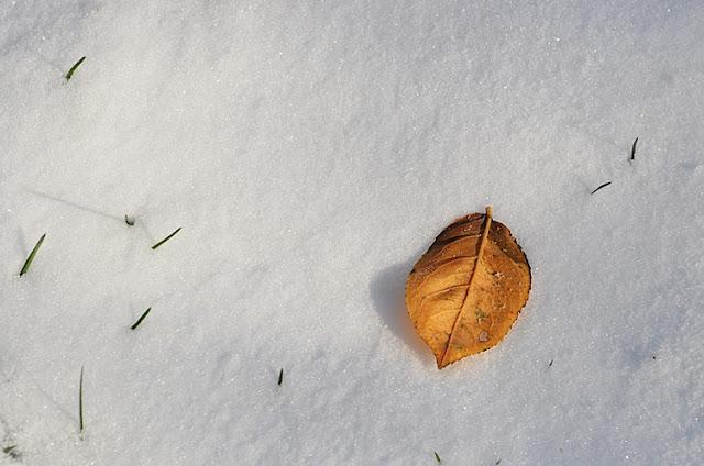 herbes feuille neige