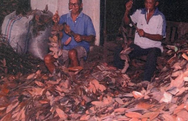 Pasang Surut Bisnis Impor Ekspor kayu Manis Dalam Negri