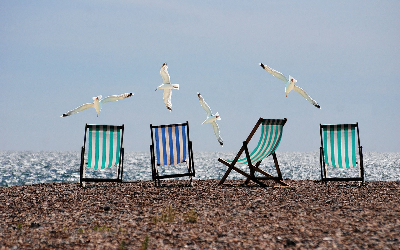 4 deck chairs on a beach with seagulls flying around them