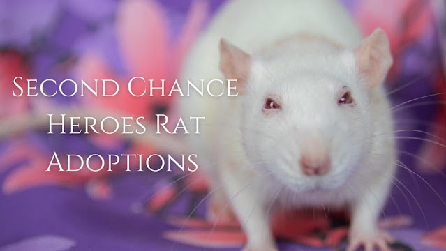 Second Chance Heroes Rat Rescue