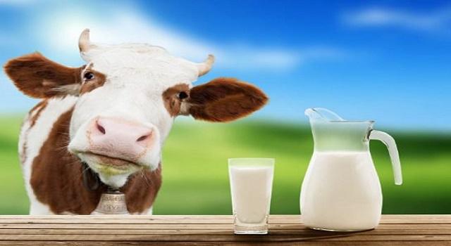Goat milk vs cow milk for babies